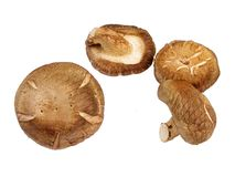 Mushrooms-design element. Mushrooms over white Stock Photos