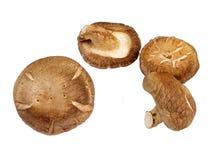 Mushrooms-design element Stock Photos