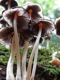 Mushrooms. Detail of mushrooms in difuse light Royalty Free Stock Photo