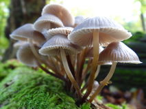 Mushrooms. Detail of mushrooms from UK forests Stock Photos