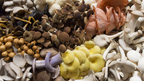 Mushrooms in different colors. Several mushrooms for sale on the market Stock Image