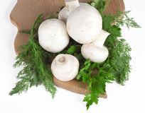 Mushrooms with dill. And parsley on a kitchen board Stock Photos