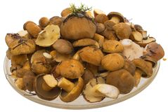 The mushrooms in the dish. Photo, edible mushrooms in the dish behind Hill Stock Images