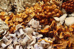 Mushrooms on display. A variety of mushrooms on display as a background Stock Images