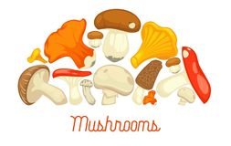 Mushrooms edible mushrooming poster. Vector flat champignon and boletus or forest chanterelle and lobster mushroom. Exotic maitake or matsutake and shiitake Stock Photography