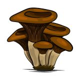 Mushrooms edible mushrooming poster. Vector flat champignon and boletus or forest chanterelle and mushroom Royalty Free Stock Image