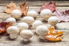 Mushrooms with fall leaves on wooden board. Stock Image