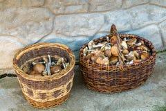 Mushrooms. Fall mushroom hunting near Moscow stock photography