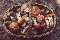 Mushrooms. In Fall season Royalty Free Stock Image