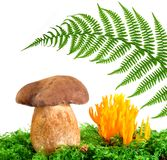 Mushrooms and fern Royalty Free Stock Photography