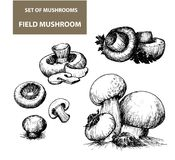 Mushrooms. This is file of EPS8 format Royalty Free Stock Images