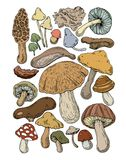Mushrooms food natural fungus stock illustration
