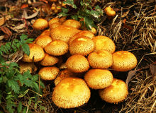 Mushrooms in the forest. Bright mushrooms in the forest Stock Image