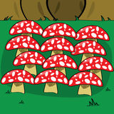 Mushrooms in forest Royalty Free Stock Photos