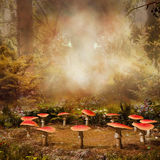 Mushrooms in the forest Stock Photography