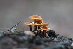 Mushrooms in the forest Royalty Free Stock Images
