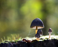 Mushrooms in the forest Royalty Free Stock Photos