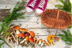 Mushrooms in forest. Card on autumn or summertime. Forest harvest. Boletus, aspen, chanterelles, leaves, buds, berries, Top view Royalty Free Stock Image