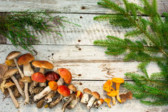 Mushrooms in forest. Card on autumn or summertime. Forest harvest. Boletus, aspen, chanterelles, leaves, buds, berries, Top view Royalty Free Stock Photo