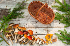 Mushrooms in forest. Card on autumn or summertime. Forest harvest. Boletus, aspen, chanterelles, leaves, buds, berries, Top view Royalty Free Stock Photography