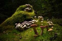 Mushrooms forest gather boletus chanterelle moss magical. Small mushrooms in autum forest on ground royalty free stock images