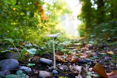Mushrooms in forest grass. Autumn forest mushroom view. Mushrooms in autumn forest stock image