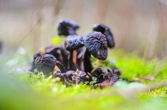 Mushrooms in forest. Macro vision royalty free stock photos