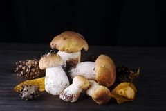 Mushrooms in the forest. Stock Images
