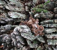 Mushrooms in the forest. Some mushrooms in the forest Stock Photo