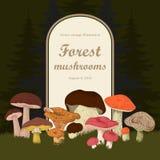 Mushrooms. Forest. Vector vintage illustration. Frame. Card. Mushrooms. Forest. Vector vintage illustration Stock Photos
