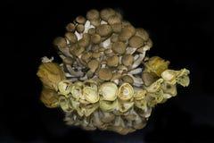 Mushrooms with fruits Stock Photos
