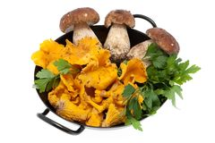 Mushrooms in frying pan Stock Photo