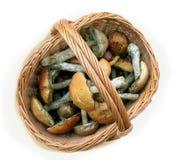 Mushrooms (Fungi) Stock Photos