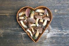 Mushrooms fungi cep boletus Xerocomus badius in heart form basket. On old wooden table Royalty Free Stock Photo