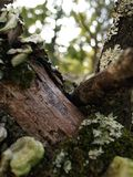 Mushrooms and fungus growing on a fallen tree limb. Mushrooms, fungus and moss growing on the bark of a fallen tree Stock Photo