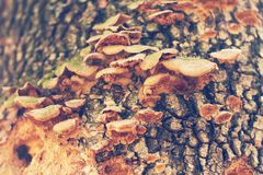 Mushrooms or fungus on a tree. Close up royalty free stock image