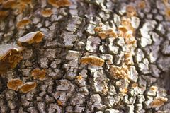 Mushrooms or fungus on a tree. Close up stock photo
