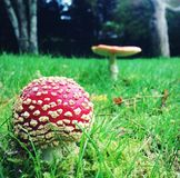 Mushrooms in the Garden. stock photography