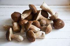 Mushrooms. Gathered in the forest fresh mushrooms Stock Image