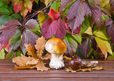 Mushrooms and grape leaves Royalty Free Stock Images