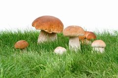 Mushrooms in grass Stock Photography