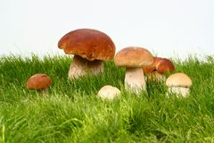 Mushrooms  in grass. And on white background Stock Images