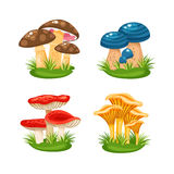 Mushrooms in grass Stock Images