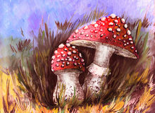 Mushrooms in the grass. Stock Photography