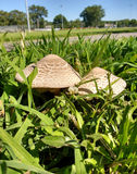 Mushrooms in the Grass Stock Photos
