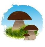 Mushrooms in grass under blue Royalty Free Stock Photos