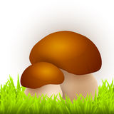 Mushrooms in grass Stock Image