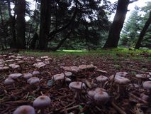 Mushrooms at a Greek forest during autumn stock photography