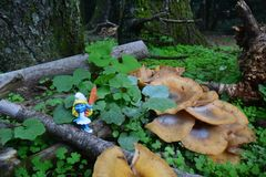 A smurf next to Mushrooms at a Greek forest during autumn royalty free stock image