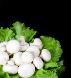 Mushrooms on green lettuce leaves Stock Images